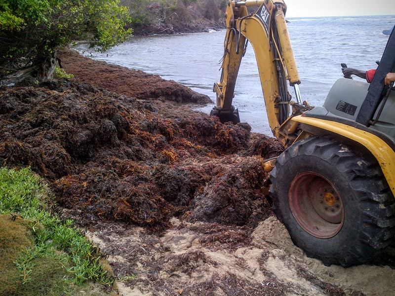 Sargassum Clean Up at Industry